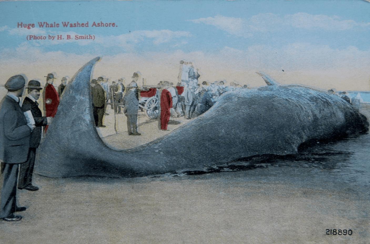 postcardwhale