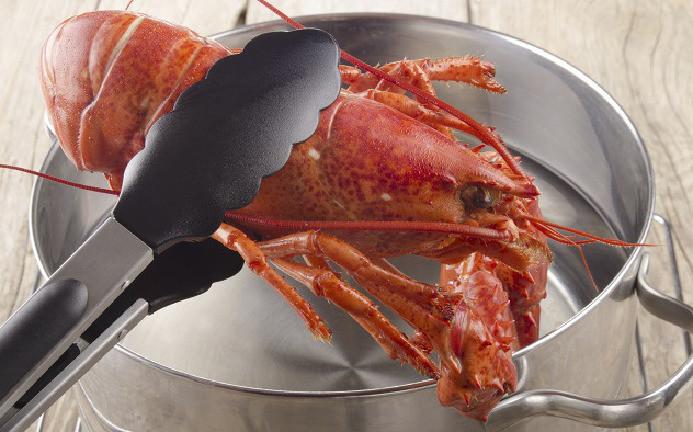 lobsterboiling