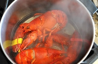 lobstersteamed