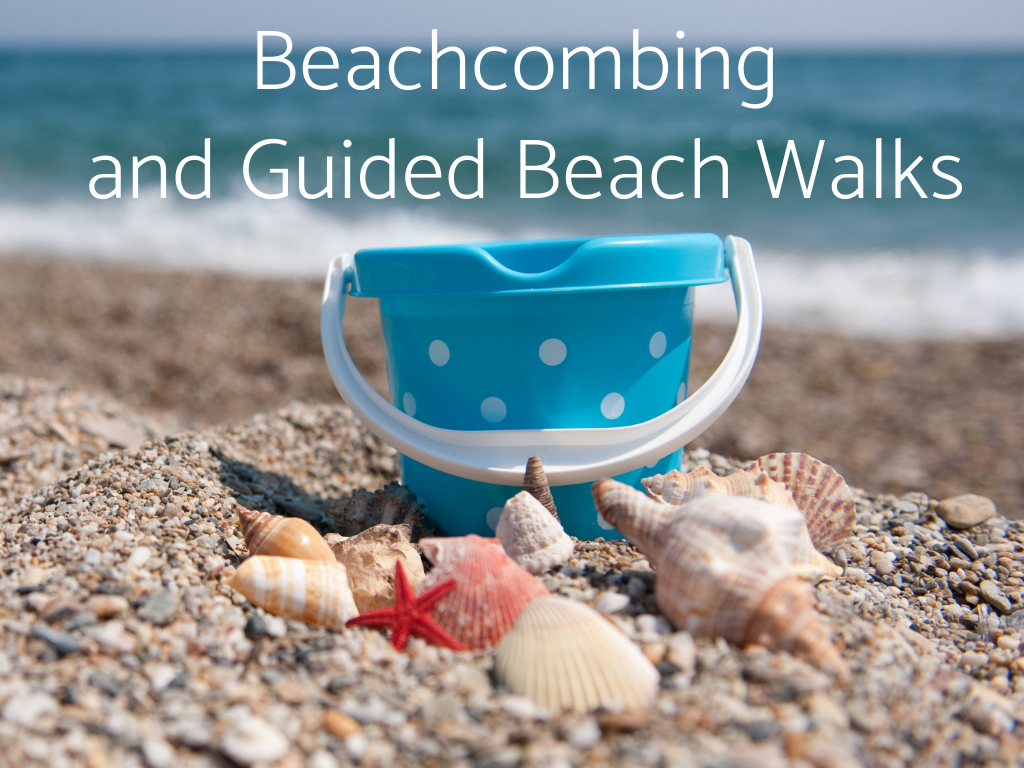 Beachcombing and Guided Beach Walks