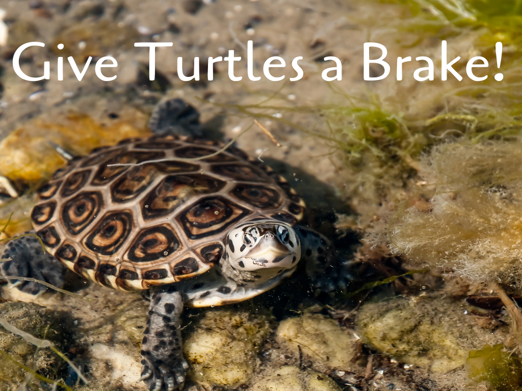 Protect the Beach: Give Turtles a Brake