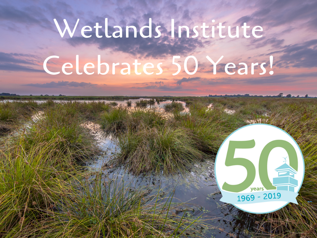 Protect the Beach: Wetlands Institute is an organization protecting the coastal eco-system