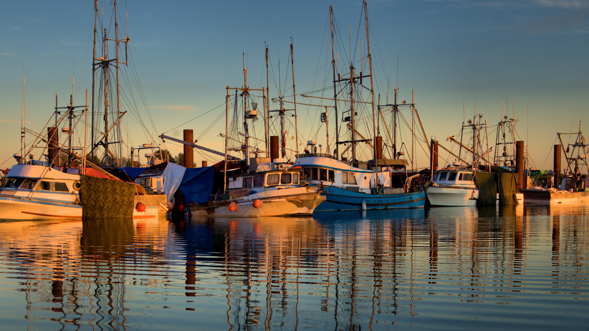 There are many fishing charters at the shore